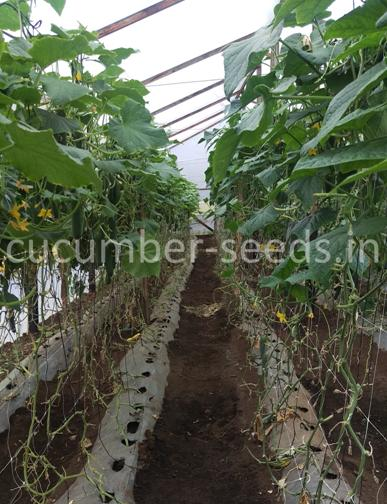 the importance of acquiring good seeds Importance of seeds (by: - js lal)  subeejam shushereto jaayaty sapadayaty means the good seed in a good field produces abundantly therefore it is very much required that the farmers must.
